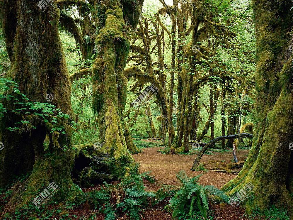 33079,地球,森林,苔藓,蕨,树,树干,壁纸图片