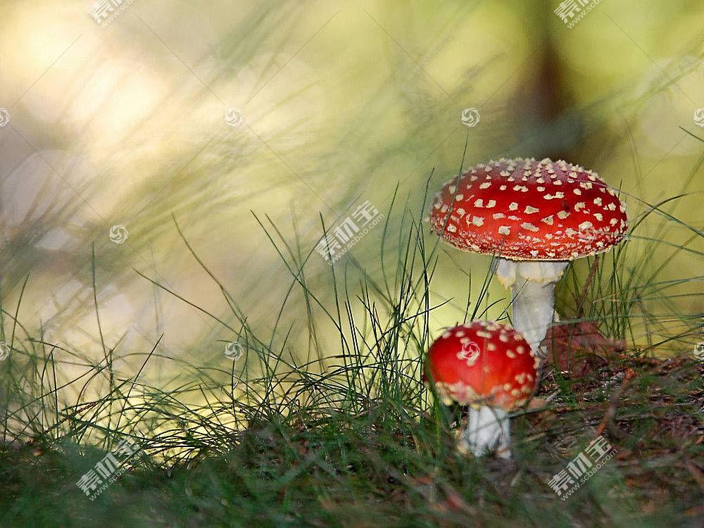 33231,地球,蘑菇,壁纸图片