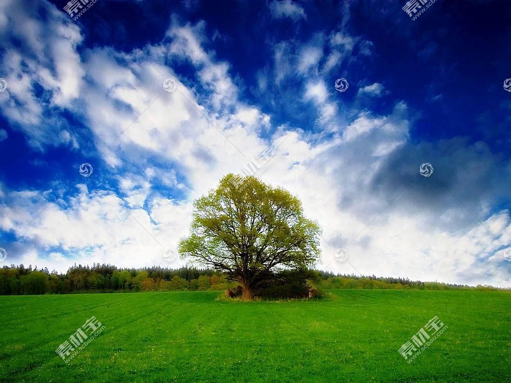 34105,地球,树,树,壁纸图片