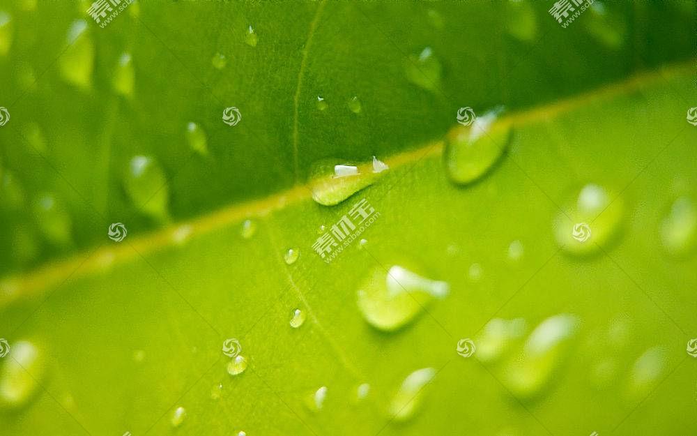 38638,地球,关闭,起来,绿色的,植物,特写镜头,巨,壁纸图片