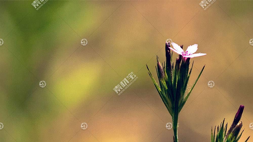 90354,地球,花,花,壁纸