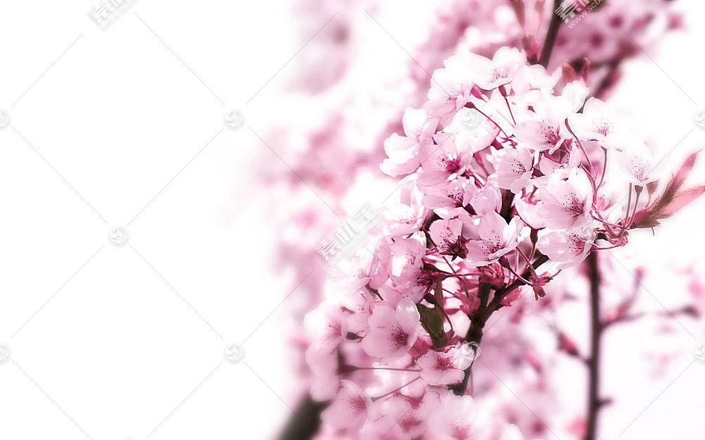 42769,地球,花,花,蜡笔,壁纸图片