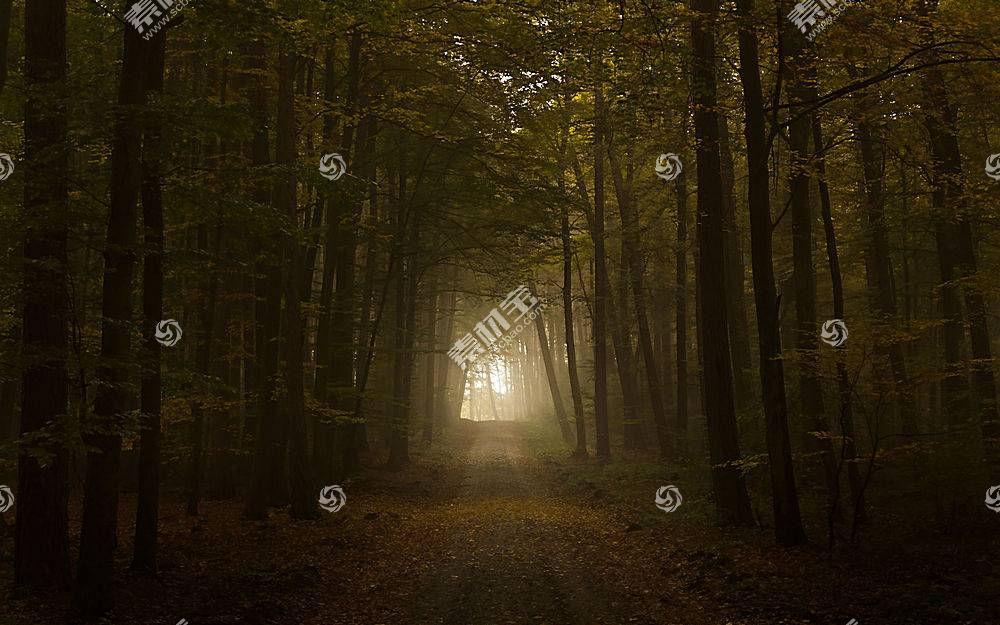 森林小路壁纸图片