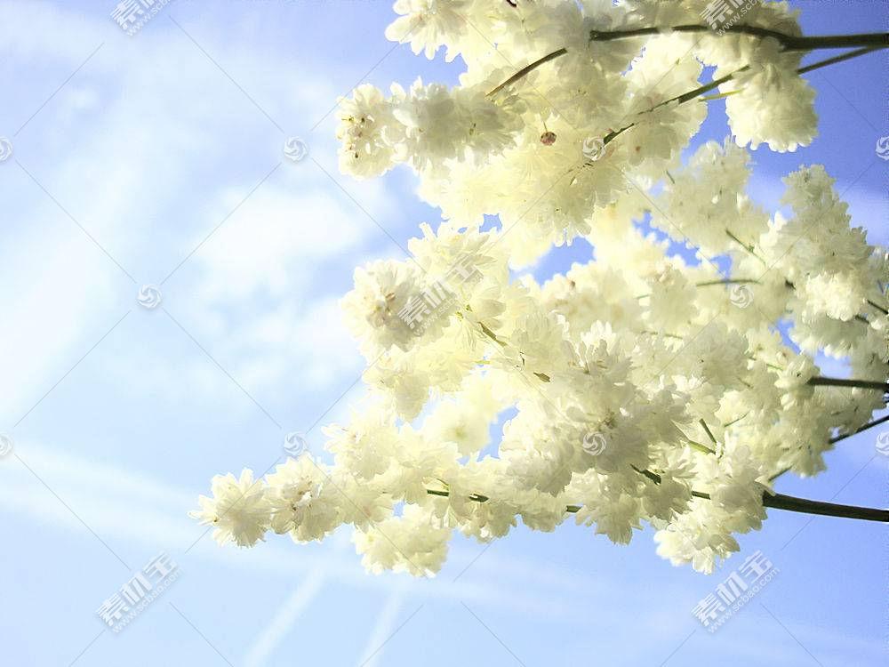 白花阳光壁纸图片
