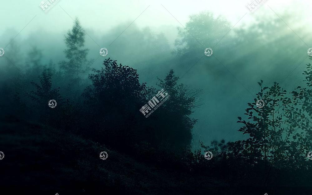 浓雾森林美景图片