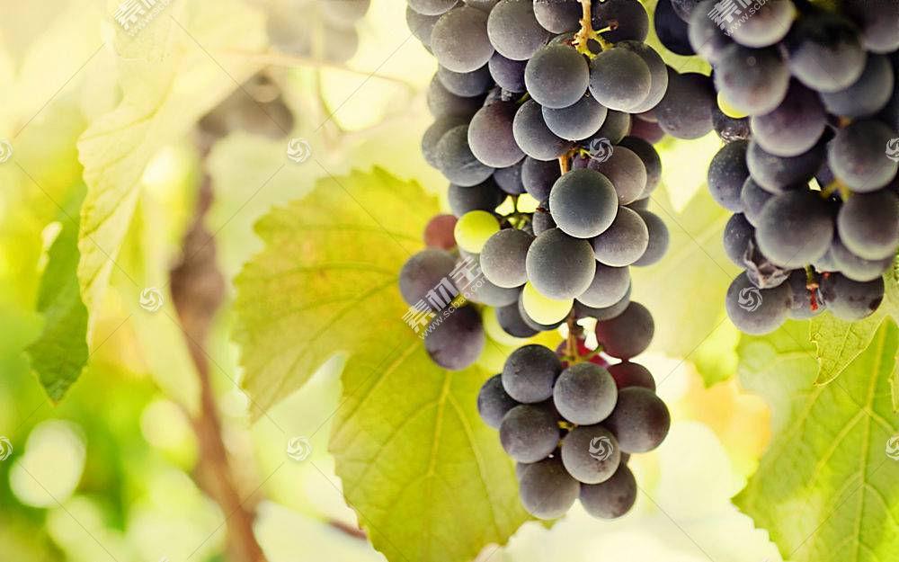 食物,葡萄,水果,壁纸(65)