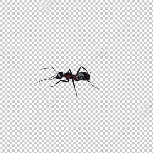黑色花园蚂蚁昆虫图波列夫ANT-2,蚂蚁PNG剪贴画动物,蚂蚁,动物,蚂