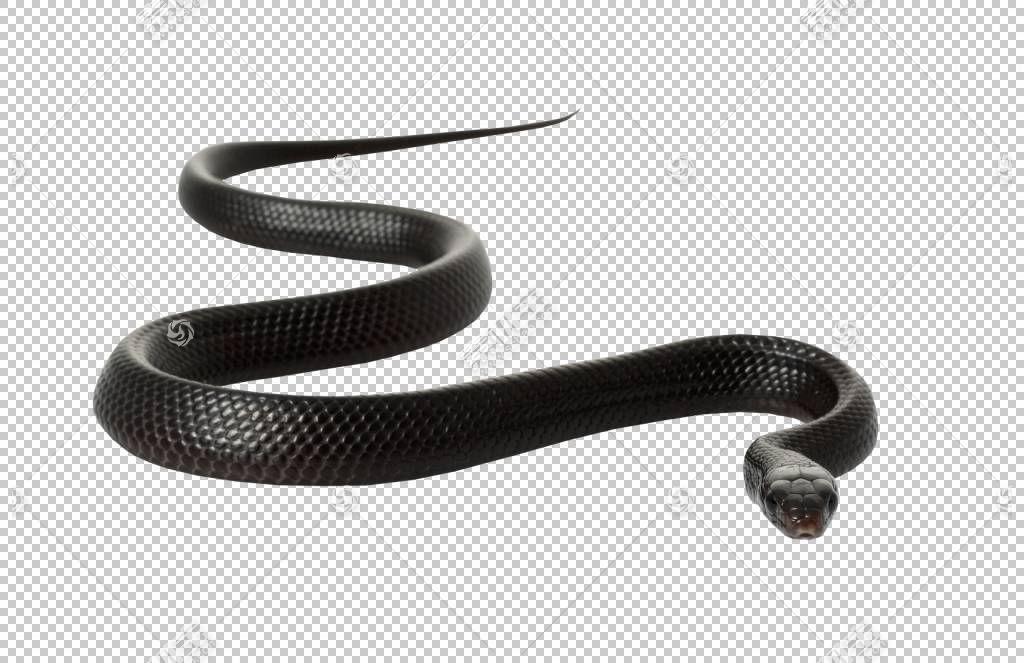 黑鼠蛇,Mamba蛇PNG剪贴画动物,材料,蛇卡通,蛇古奇,蛇,药房杯Amp