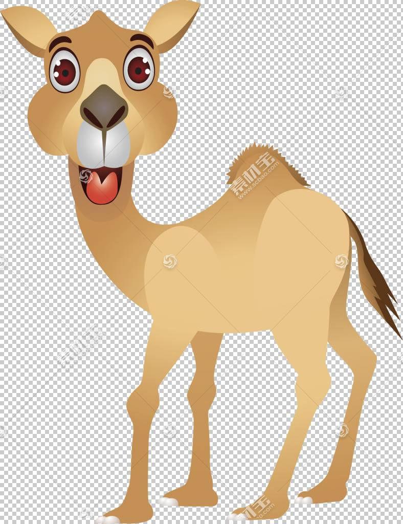 骆驼卡通幽默,骆驼PNG剪贴画哺乳动物,动物,脊椎动物,卡通骆驼,动