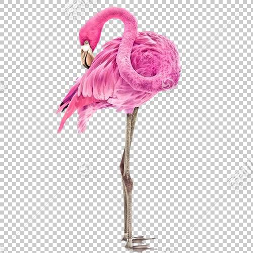 鸟火烈鸟,红鸟PNG剪贴画水彩画,3D计算机图形学,动物,爱情鸟类,卡