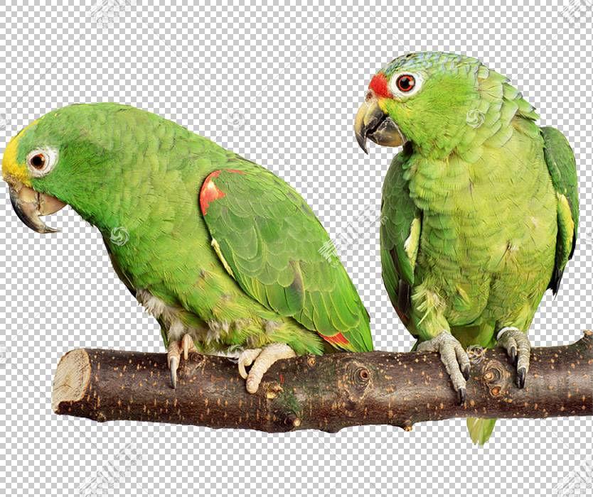 鹦鹉鸟Budgerigar鹦鹉仓鼠,鹦鹉PNG剪贴画彩绘,动物,手,宠物,鹦鹉