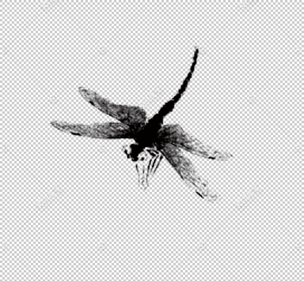 蜻蜓水彩画,蜻蜓墨水PNG剪贴画单色,语音气球,昆虫,卡通,墨水标记