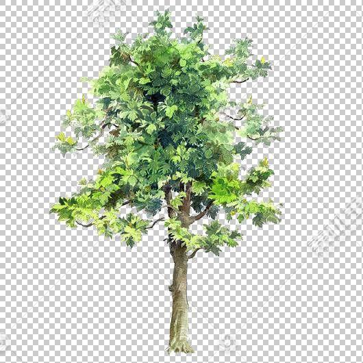 树绘图水彩绘画建筑,树木画树绘元素,绿叶树PNG剪贴画叶,树枝,分