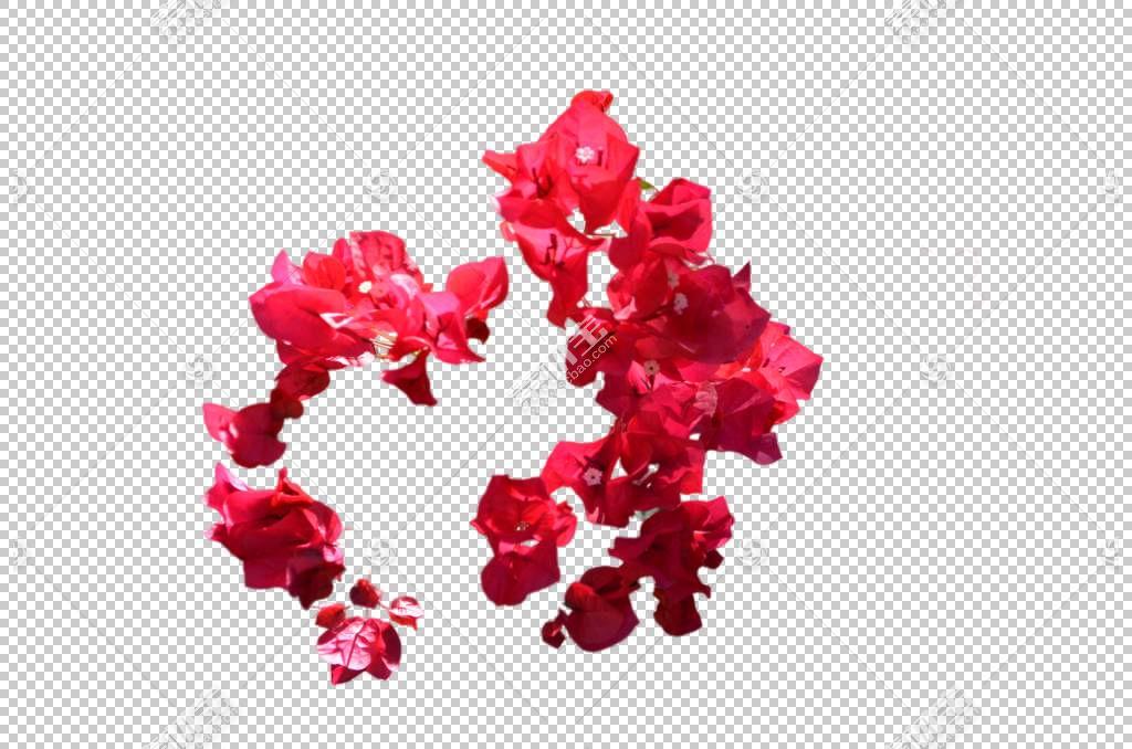 粉红色花卡通,粉红色家庭,洋红色,花瓣,蓝色,无符号,花,红色,