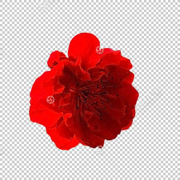 粉红色花卡通,粉红色家庭,红色,花,花瓣,玫瑰,玫瑰家族,切花,康乃