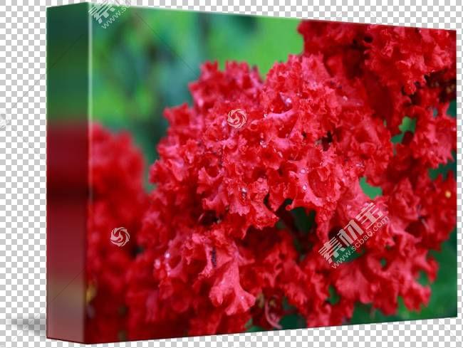 粉红色花卡通,粉红色家庭,花瓣,灌木,花,红色,杜鹃花,