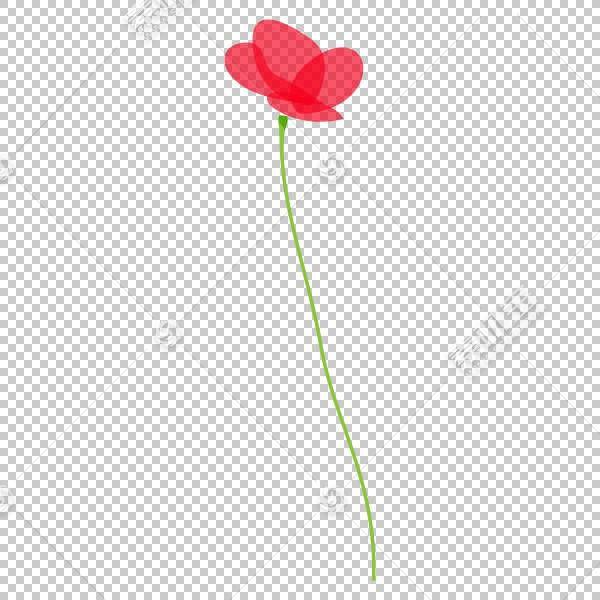 粉红色花卡通,红掌,Coquelicot,花瓣,植物,粉红色,花梗,红色,数据