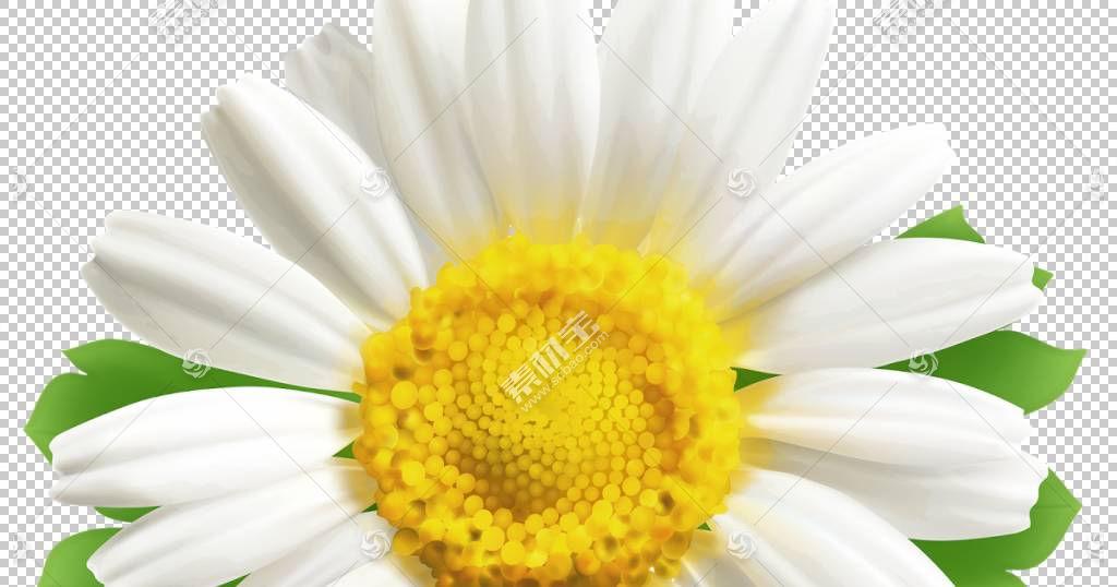 黄花,黛西,关门,玛格丽特黛西,黄色,花瓣,Chamaemelum Nobile,花