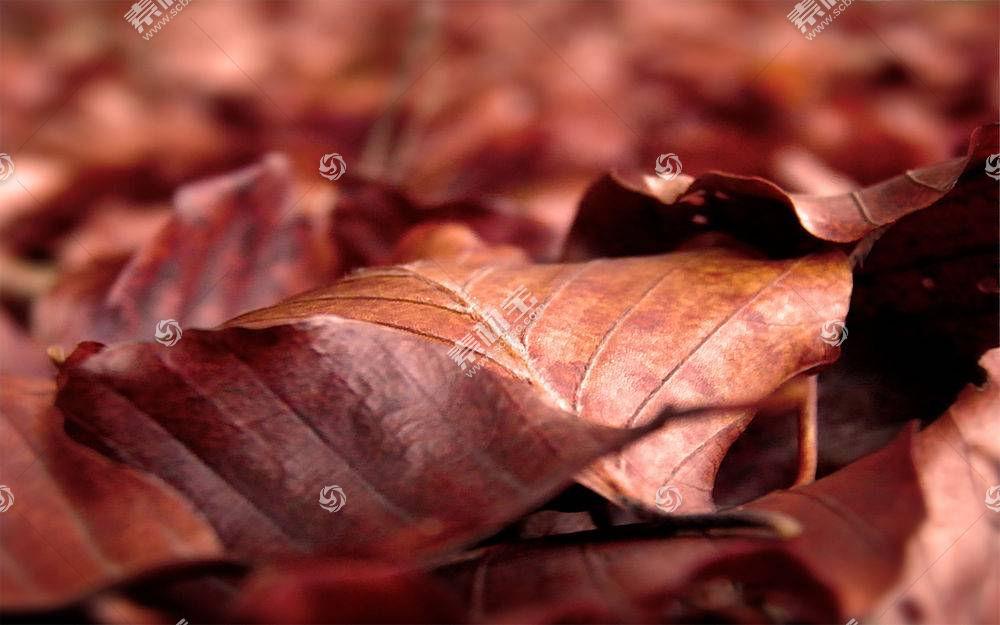 地球,叶子,壁纸,(213)