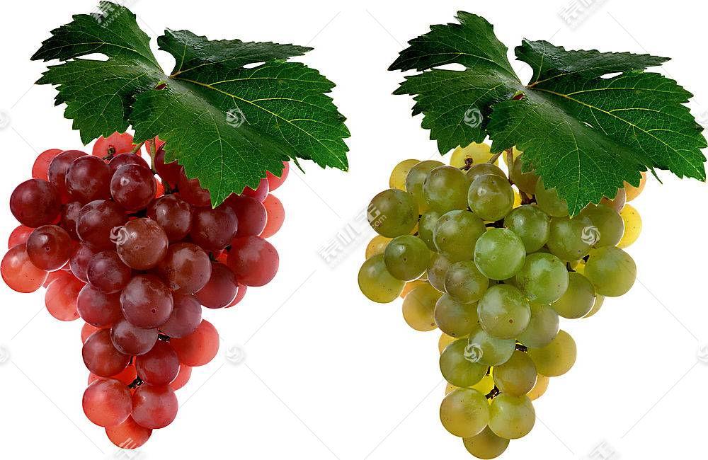 食物,葡萄,水果,壁纸(35)