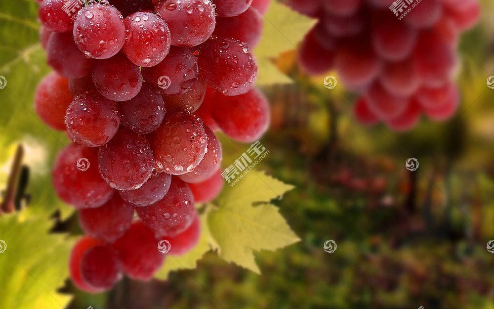 食物,葡萄,水果,壁纸(46)