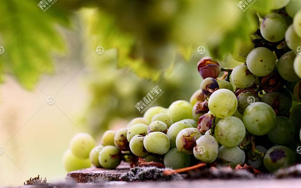 食物,葡萄,水果,壁纸(18)