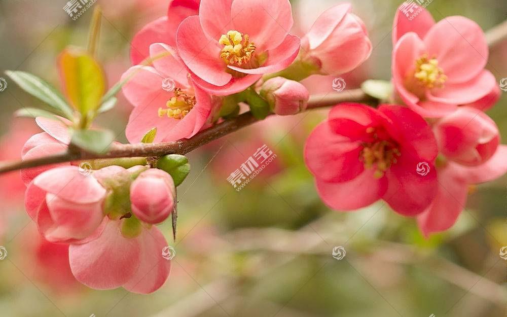 地球,花,花,壁纸,(131)