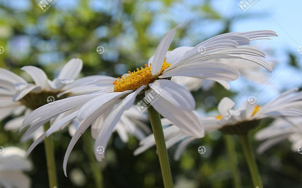 地球,花,花,壁纸,(133)