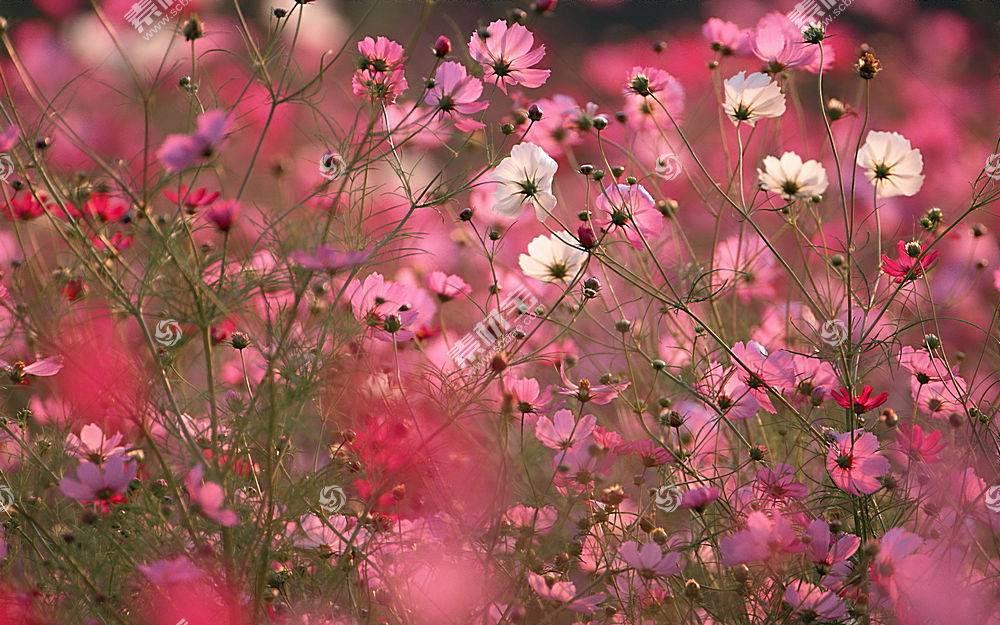 地球,花,花,壁纸,(137)