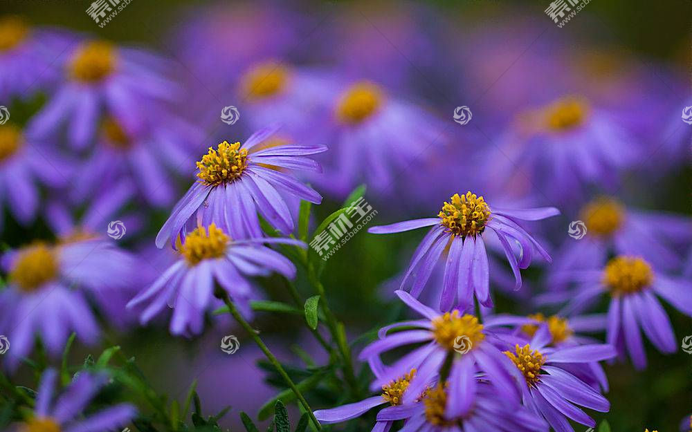 地球,花,花,壁纸,(138)