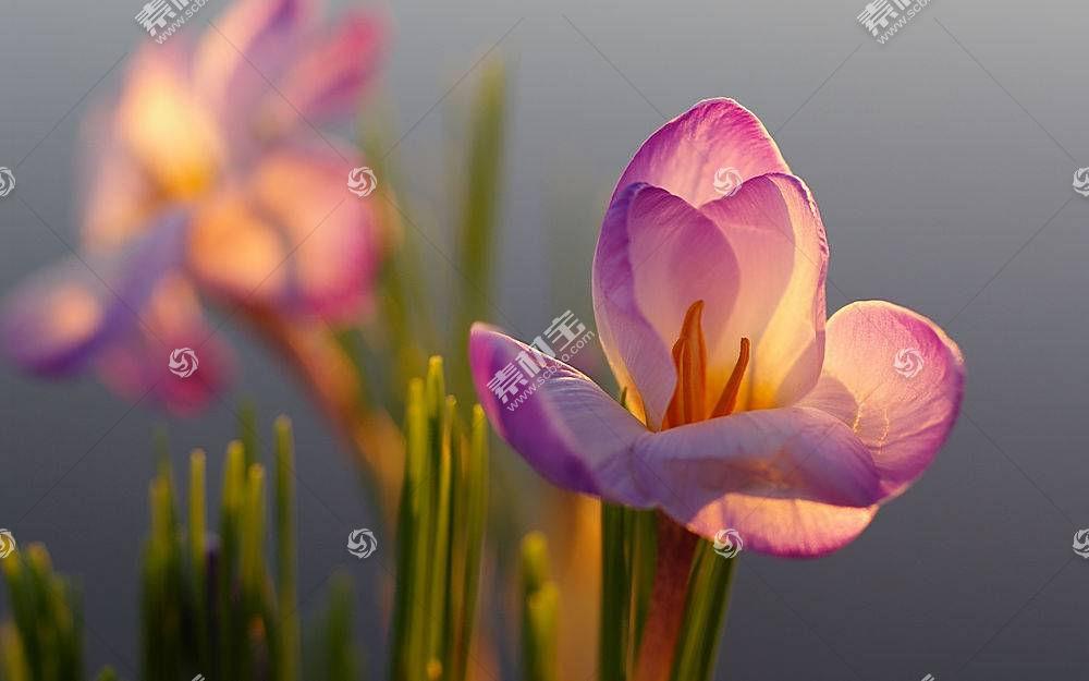 地球,花,花,壁纸,(142)