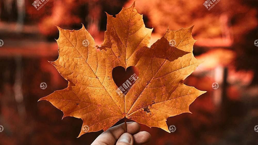 地球,叶子,枫树,叶子,壁纸,