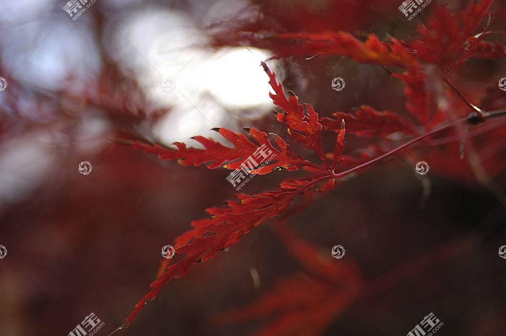 地球,叶子,树枝,Bokeh,壁纸,