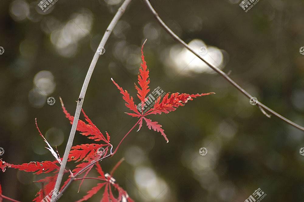 地球,叶子,壁纸,(5)