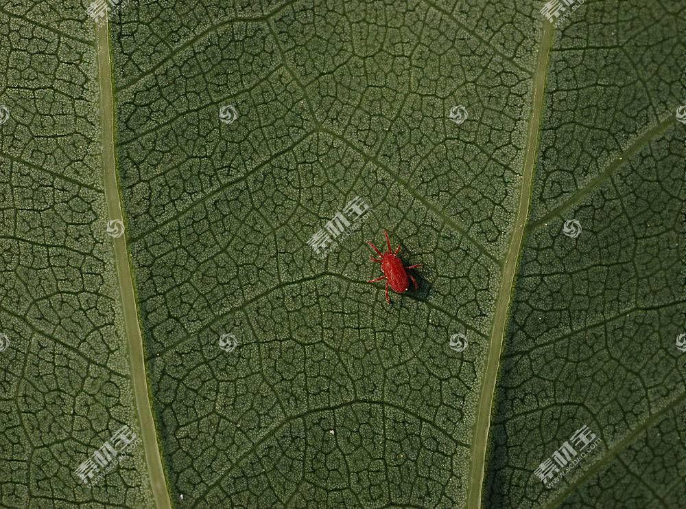 地球,叶子,小虫,壁纸,