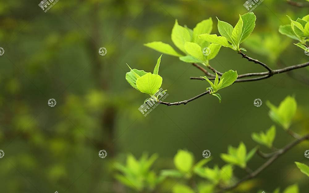 地球,叶子,巨,树枝,弹簧,壁纸,