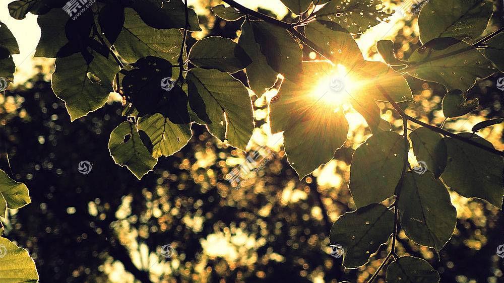 210306,地球,叶子,壁纸
