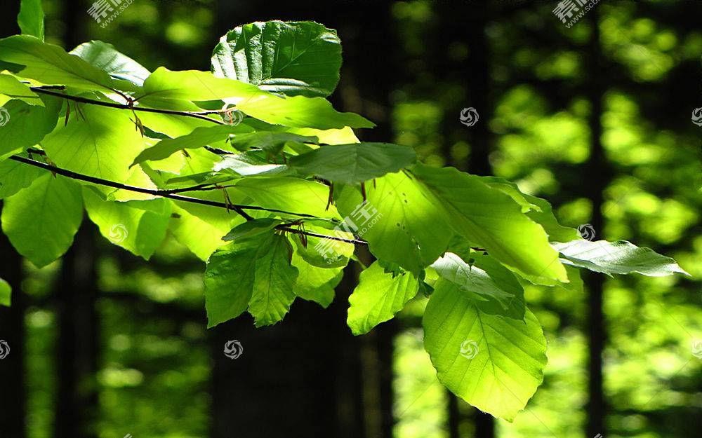 161687,地球,叶子,壁纸