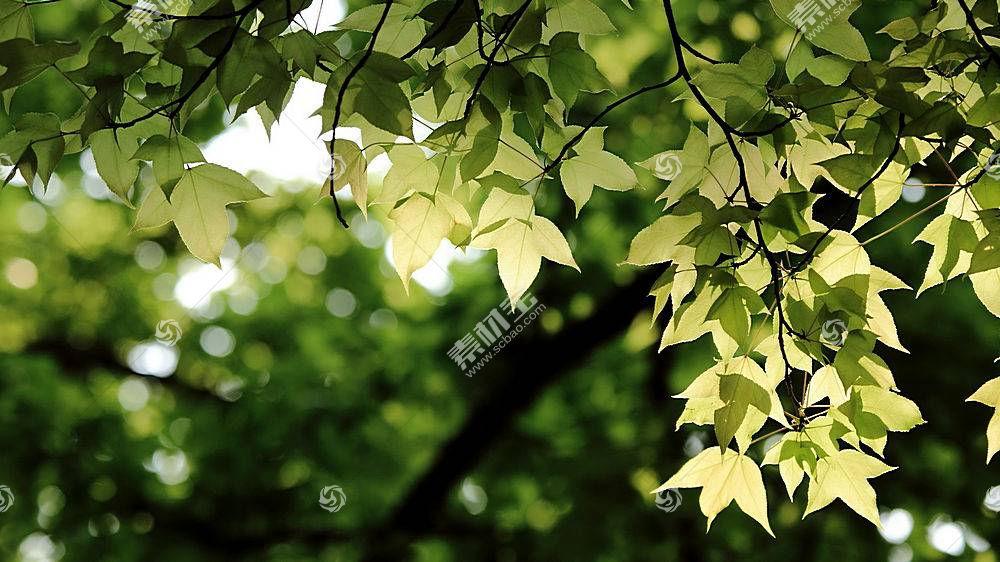 239772,地球,叶子,壁纸