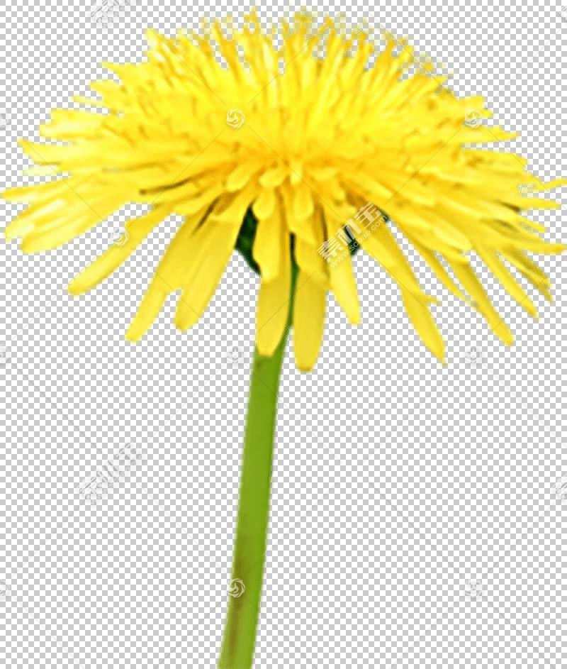 花卉剪贴画背景,非洲菊,牛眼雏菊,植物茎,切花,锥花,黄色,雏菊家