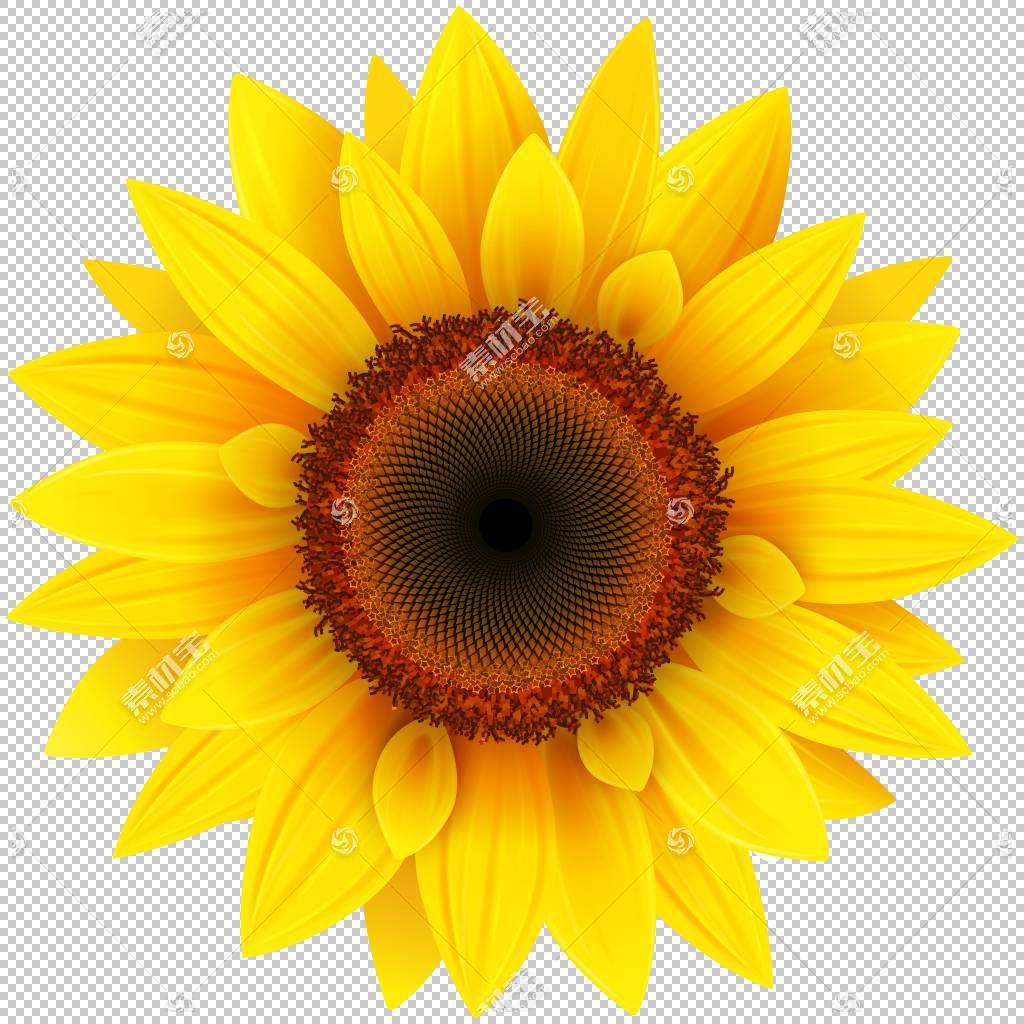 家庭卡通,雏菊家庭,花,黄色,花瓣,向日葵,关门,花粉,葵花籽,计算