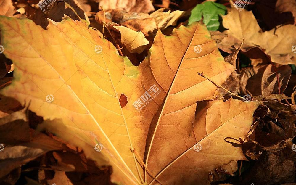 地球,叶子,壁纸,(200)