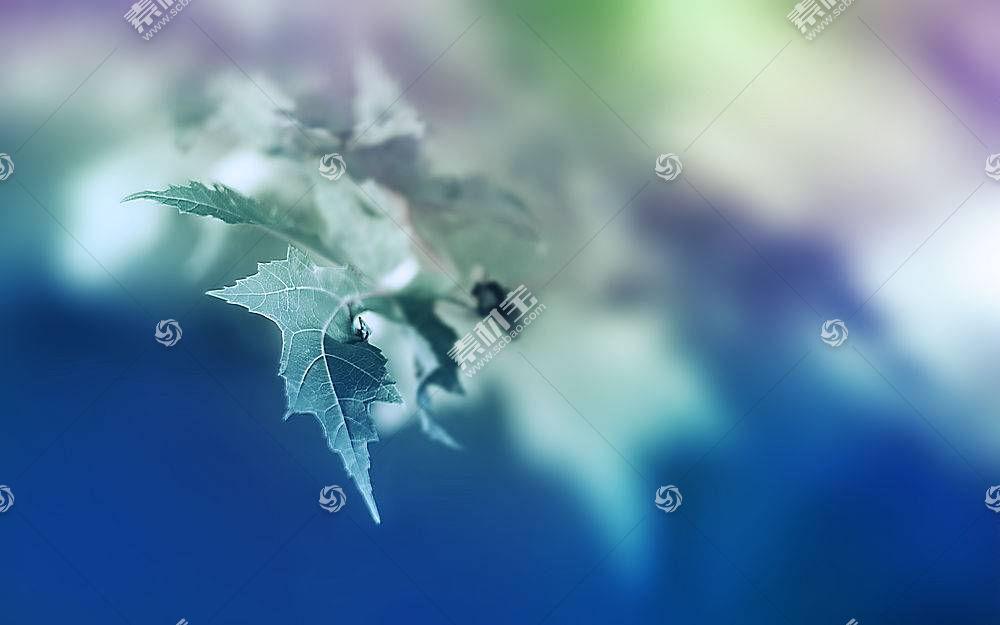 地球,叶子,壁纸,(193)