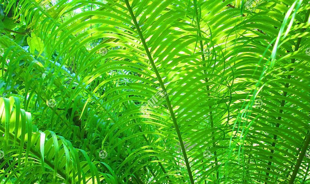 地球,蕨,树,自然,风景,壁纸,图片