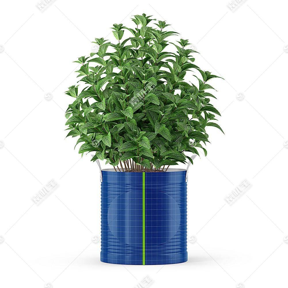 植物盆栽铁桶花盆智能展示样机素材