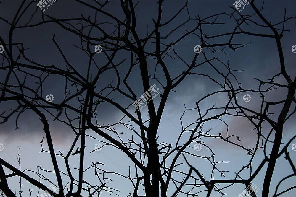 地球,树,树,壁纸,(315)