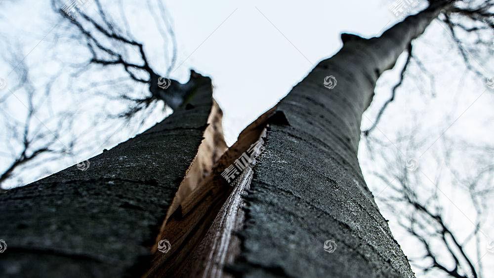 地球,树,树,使分离,树,自然,森林,壁纸,图片