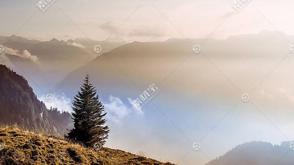 地球,雾,树,自然,风景,壁纸,图片