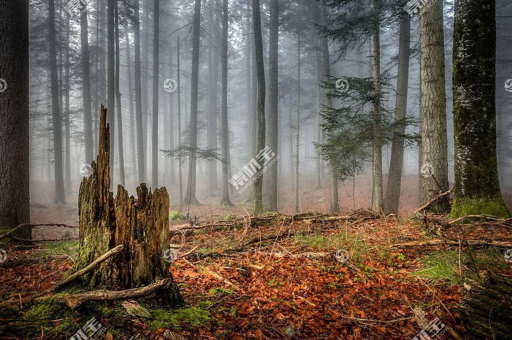 地球,雾,自然,树,森林,壁纸,(1)图片