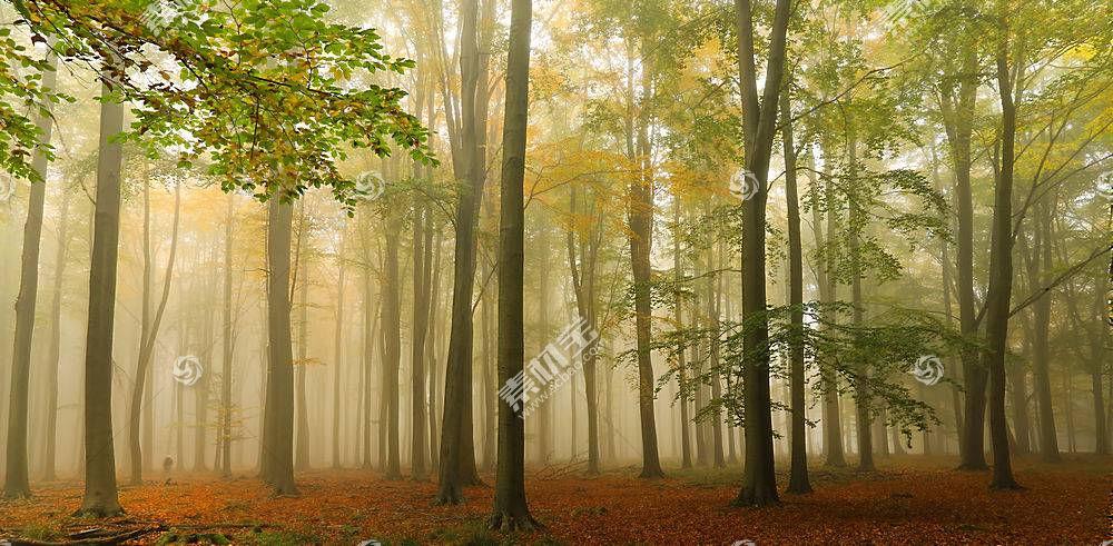 地球,雾,自然,树,森林,壁纸,(3)图片